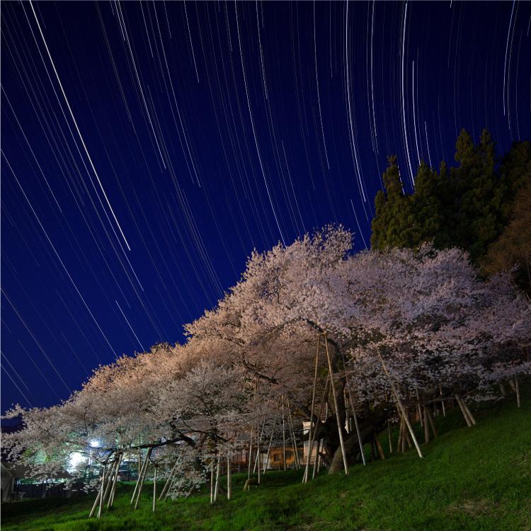 臥龍桜と星