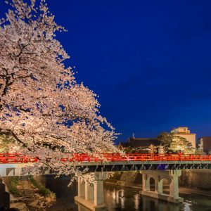Akabashi and Sakura