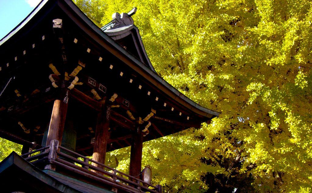 高山国分寺の秋